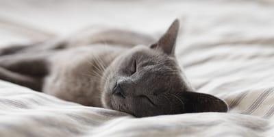 Heb je liever een rustige of een actieve kat?