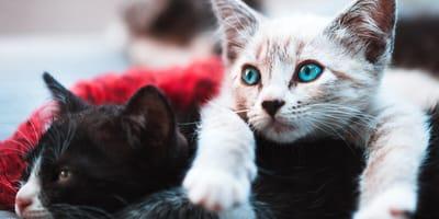 Doe de test: Welke kat past bij mij?