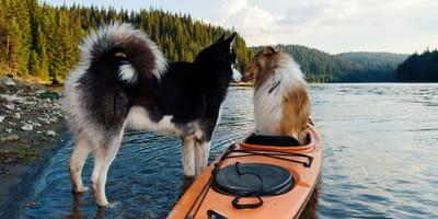 Hoe actief wil je dat je hond is?
