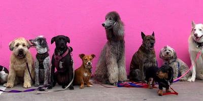 Doe de test: Welke hond past bij mij?