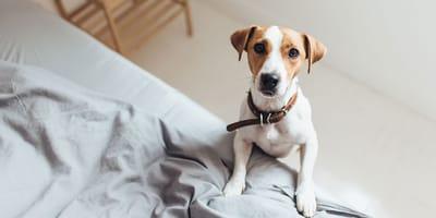 Hoe vaak zal je hond alleen thuisblijven?