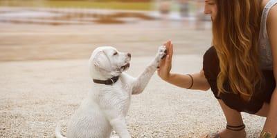 Wat is uw kennisniveau over honden?